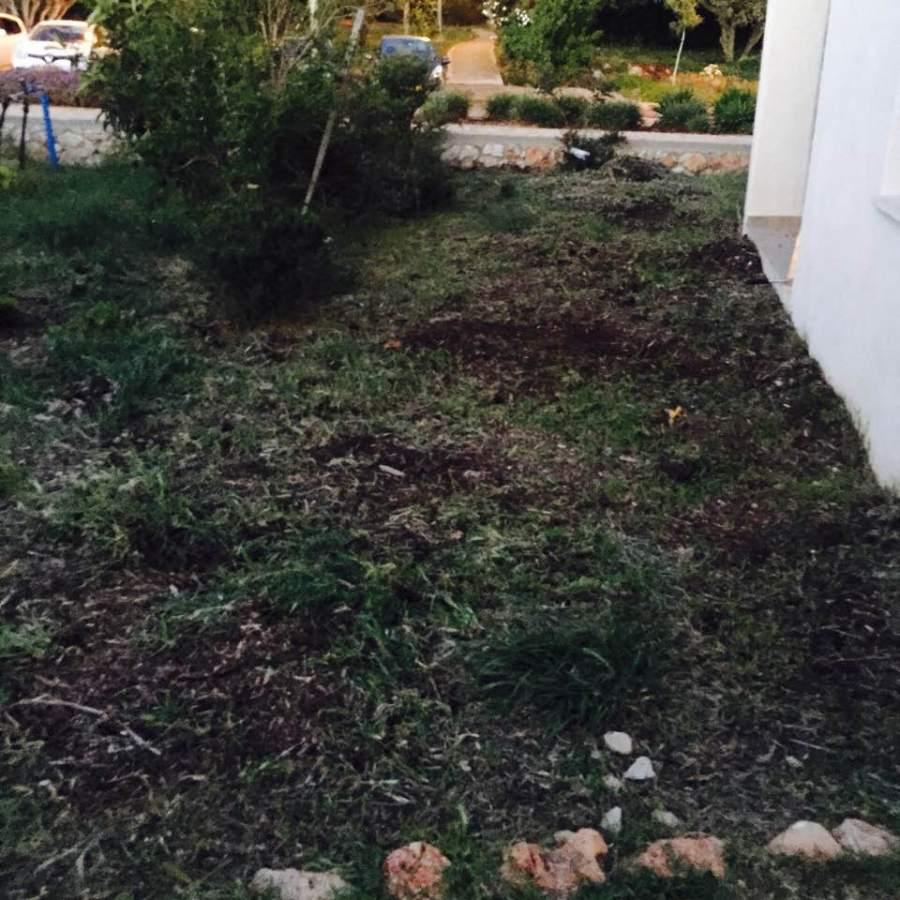 עשבים1